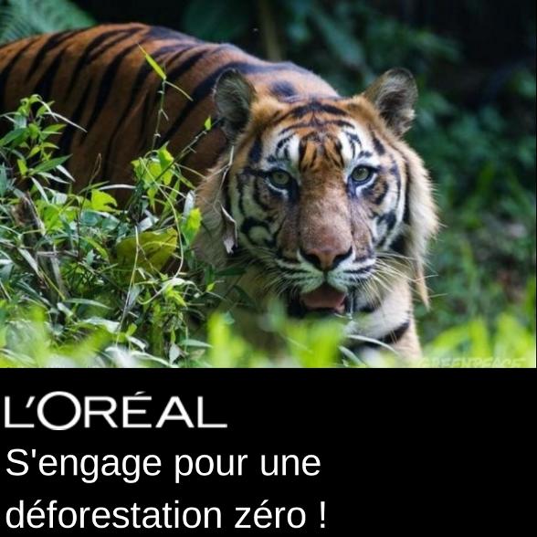 Assez Déforestation : L'Oréal se fait une beauté - Greenpeace France KV93