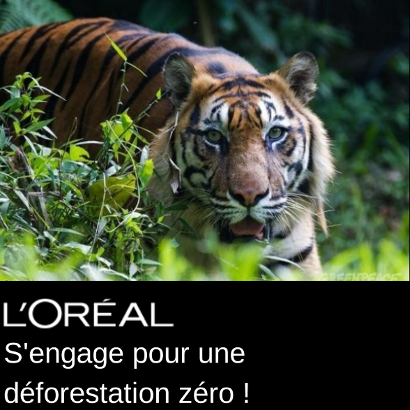 lorealblog