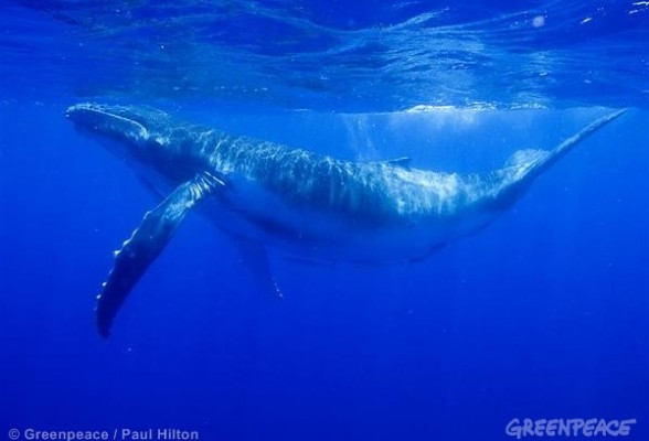 Humpback Whale Documentation