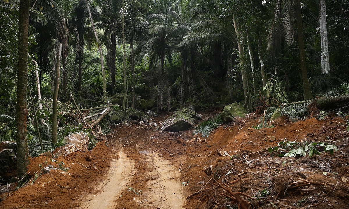 Une route fraîchement ouverte dans les forêts de Sao Tomé. L'expansion de la culture de palmiers à huile créé des accès forestiers qui facilitent le transport de grumes illégales. © Micha Patault / Greenpeace