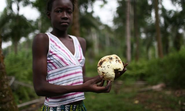 """Un enfant avec un fruit """"d'arbre à pain"""" à Praia Pesqueira. Les populations locales en dépendent directement pour vivre. Mais à cause de l'expansion des plantations de palmiers à huile, cette denrée tend à disparaître. © Micha Patault / Greenpeace"""