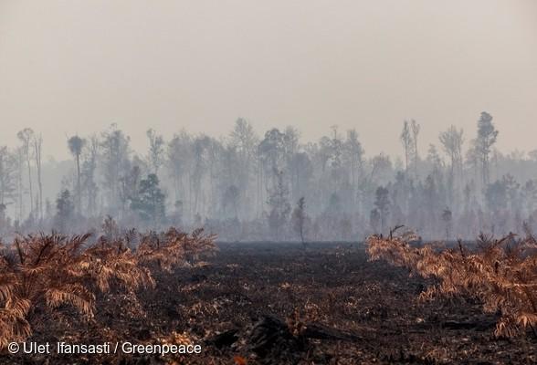 Deforestation indonésie feux de forêt incendie Pontiniak