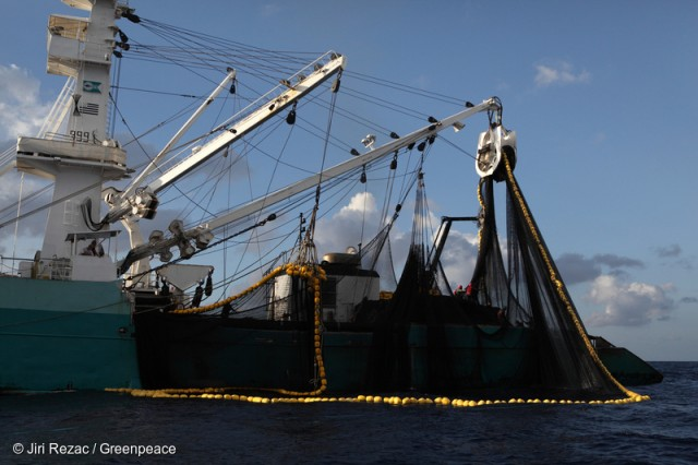 Purse Seiner Fishing in the Indian Ocean