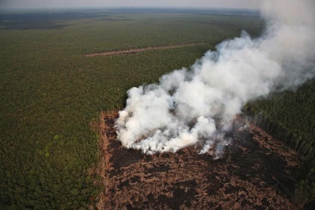 Nettoyage forestier en Indonésie © Greenpeace / John Novis