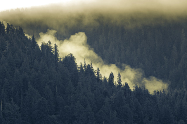 Brouillard sur la Great Bear Rainforest © Andrew Wright / Greenpeace