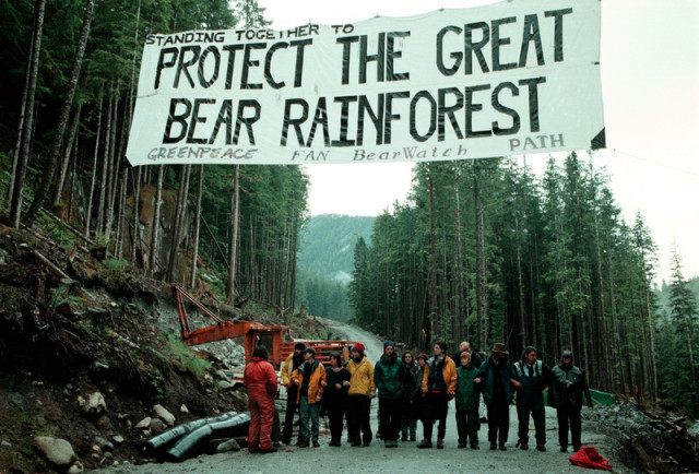 Action de blocage - Great Bear Rainforest © Greenpeace / Greg King 1997