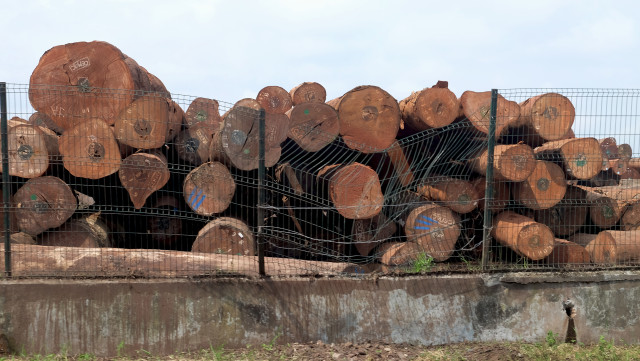 Tas de troncs coupés, entreposés avant export, Port de Douala, Cameroun Ⓒ  Greenpeace / John Novis