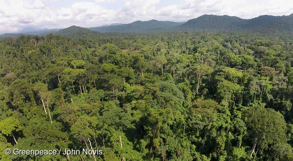 Vue aérienne de la forêt camerounaise