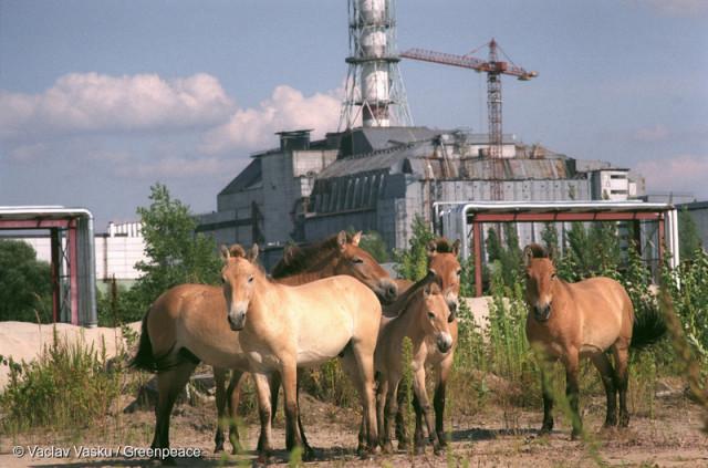 Wild Horses in Pripyat Wilde Pferde in Pripyat