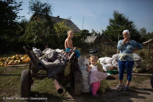 In the village of Vezhytsia, the Rokitne District of the Rivne Region, a family has just brought a wagon full of locally grown potatoes. To understand better how contamination affects the lives of Chernobyl survivors, Greenpeace carries out two pilot investigations into the remaining radionuclide contamination of locally produced food and forests.