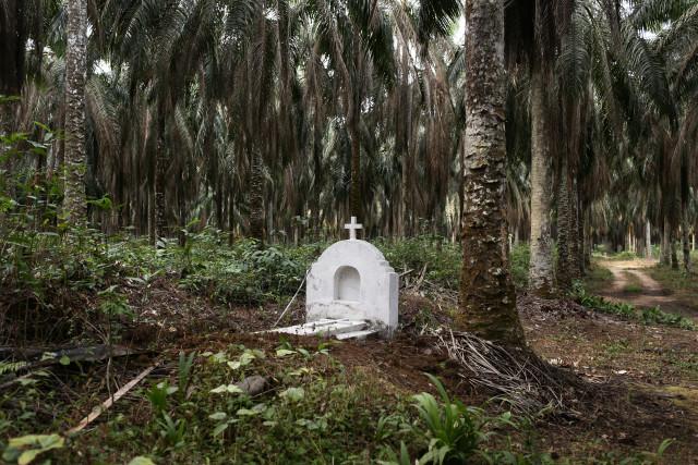 Cette tombe est la seule rescapée d'un cimetière envahit par une concession de la Socapalm. © Micha Patault / Greenpeace