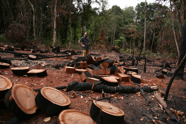 Destruction de forêts pour ouvrir des routes nécessaires au concessions d'huile de palme. © Micha Patault / Greenpeace