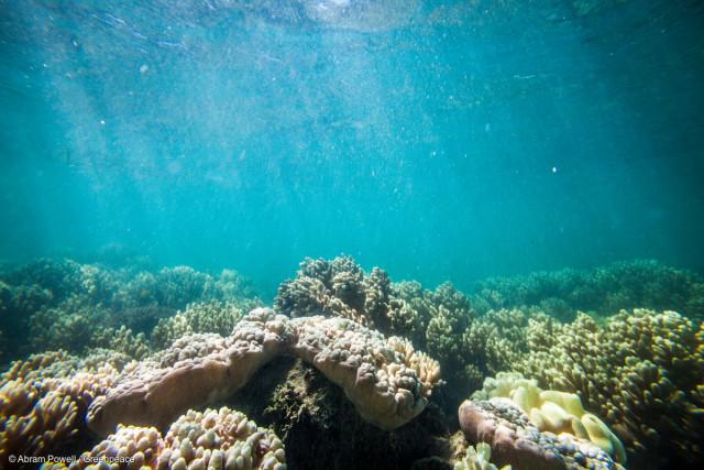 Corail blanchi à proximité de Fitzroy Island.
