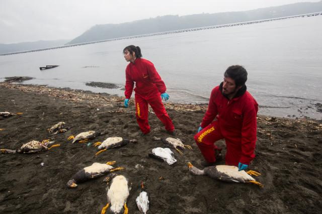 Crise environnementale à Chiloé