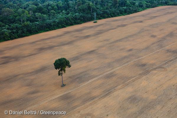 Un champ de soja gagné sur la forêt amazonienne, au Brésil