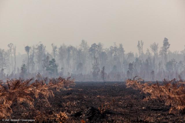 Feux de forêt au Kalimantan.