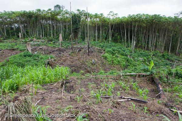Déforestation en RDC