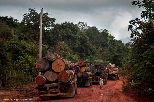 Des camions chargés de troncs d'arbres attendent la réparation du bateau utilisé pour traverser la rivière Curuá-Una, près de Satarém, dans l'état de Pará.