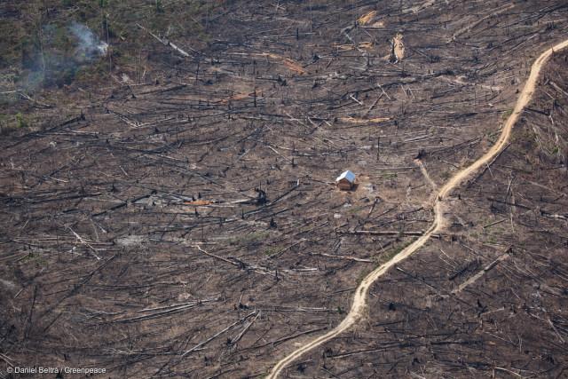 Photo aérienne montrant l'étendue de la destruction de la forêt tropicale dans la province de Jambi, sur l'île indonésienne de Sumatra.