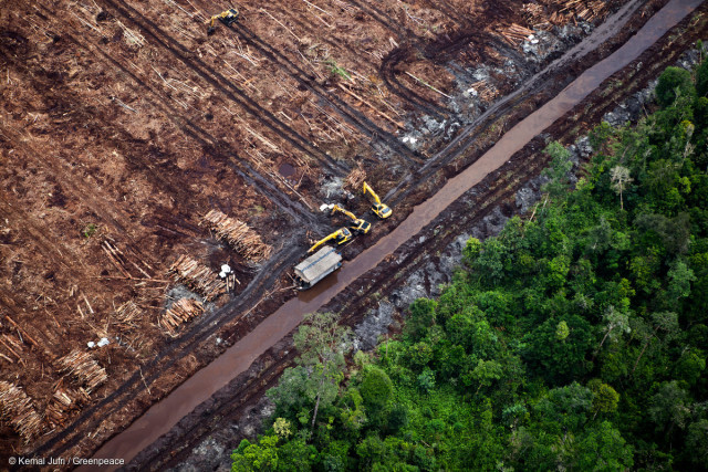 Des excavatrices stockent des troncs d'arbres issus d'une forêt humide le long d'un canal creusé à travers les tourbières de l'île de Sumatra (Indonésie).