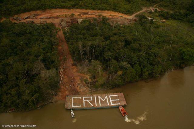 Découverte par Greenpeace d'une opération illégale d'exploitation forestière construite autour de 200km de routes en Amazonie, au Brésil.