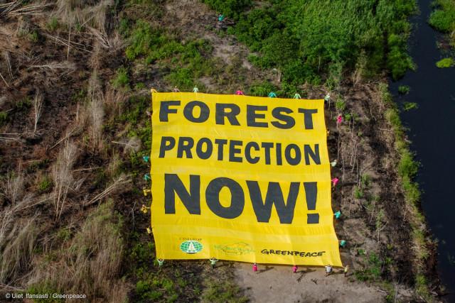 Des militants de Greenpeace déploient une banderole demandant la protection de la forêt dans la région de Kalimantan, en Indonésie.
