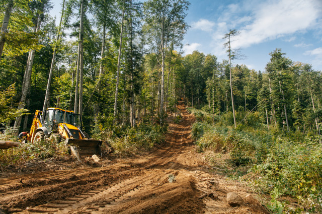 Une route utilisée par des exploitants forestiers. Greenpeace a documenté des opérations d'exploitation forestières dans les montagnes de Făgăraș, en Roumanie, pour attirer l'attention sur un déboisement immoral et illégal dans les dernières forêts anciennes du pays.