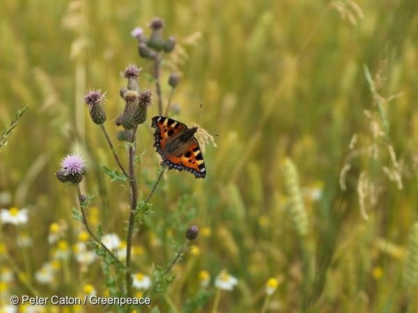 papillon-butine-fleur