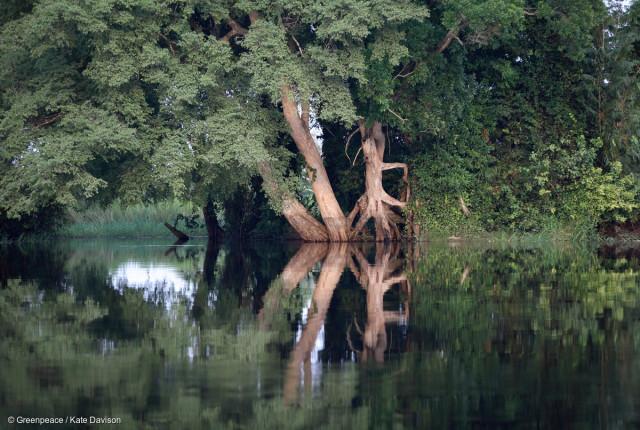 La rivière Lukenie, République Démocratique du Congo. La croissance des activités d'exploitation forestière dans des zones comme celle-ci a un impact critique sur le climat, la biodiversité ainsi que des conséquences économiques et sociales lourdes pour les communautés locales.
