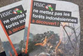 HSBC doit cesser de financer la déforestation en Indonésie !