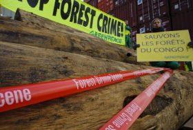L'Europe prend enfin la décision de bannir le bois illégal