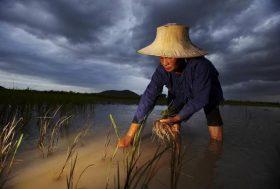 Agriculture : changer de modèle pour nourrir tout le monde