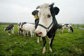 Oui au camembert qui pue, non à l'agriculture qui pollue