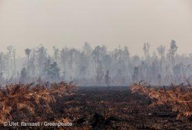 Indonésie : quand l'huile de palme met le feu