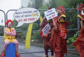 10 ans de moratoire sur le soja : retour sur une victoire pour l'Amazonie