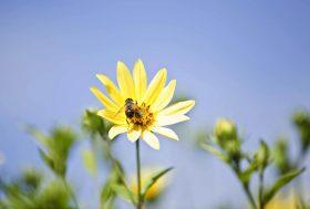 Loi biodiversité : un pas en avant pour les pollinisateurs