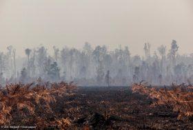 Action contre IOI, l'entreprise qui détruit la forêt tropicale en Indonésie