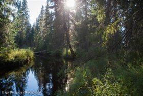 La forêt boréale de Dvinsky pourrait avoir disparu dans 10 ans
