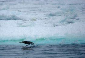 Préservation de la biodiversité : les États doivent accélérer la cadence
