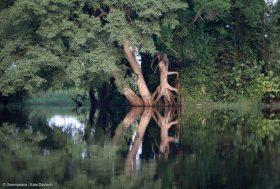 Dans le Bassin du Congo, le mythe de l'exploitation durable du bois mord la poussière