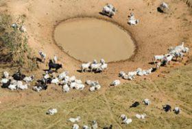 Brésil, Etat du Mato Grosso : Greenpeace dénonce le rôle de l'élevage dans la déforestation