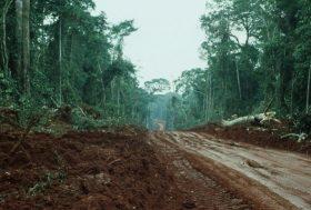 Congo: 25 millions d'hectares de forêts menacés à long terme