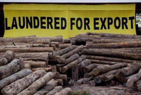 Déforestation en Amazonie : le gouvernement brésilien doit agir
