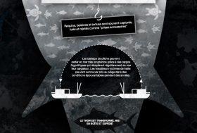 Thon : derrière une industrie globalisée, la violation des droits humains