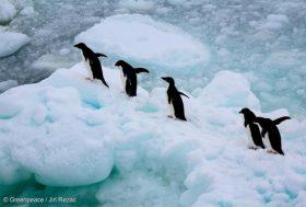 Victoire! La plus vaste réserve marine du monde est créée au large de l'Antarctique