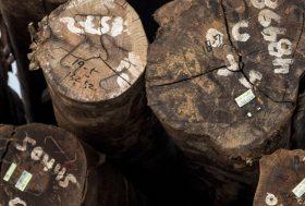 Renforcement de la législation UE contre l'importation de bois illégal