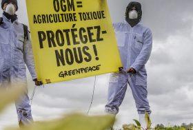 Les OGM bannis par la majorité des pays européens