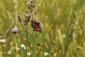 Pesticides néonicotinoïdes : les pollinisateurs ne sont pas les seuls à être menacés