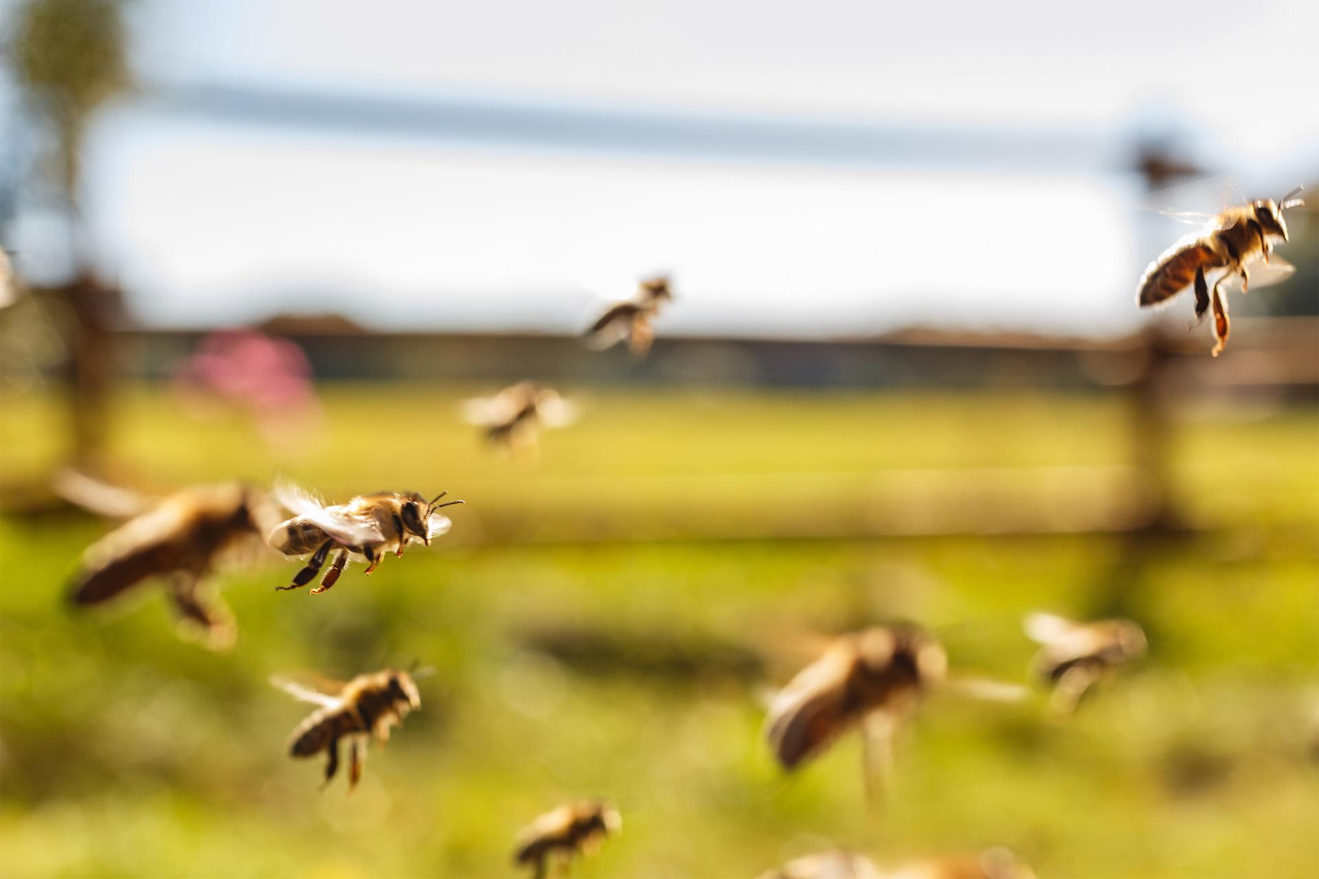 """Résultat de recherche d'images pour """"abeille et agriculture"""""""