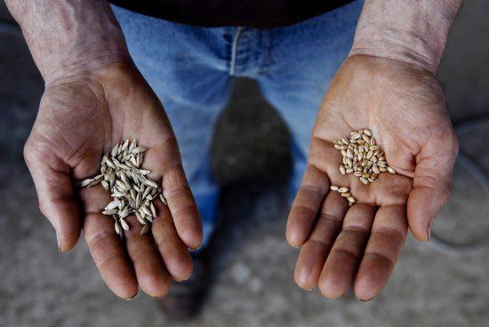 Soutenir les agriculteurs écologiques